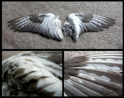 Whiteface Cinnamon Pearl Cockatiel Wings by CabinetCuriosities