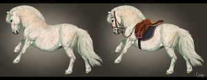 Pirouette - Shetland Mare - Ref Sheet by BH-Stables