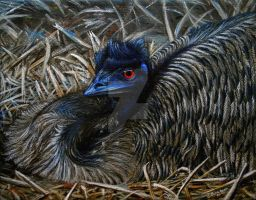 Emu Elegance by ART-fromthe-HEART
