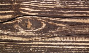 Wood Texture 12 by Limited-Vision-Stock