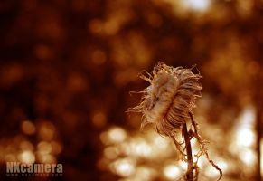 Defrost Beauty by NXcamera