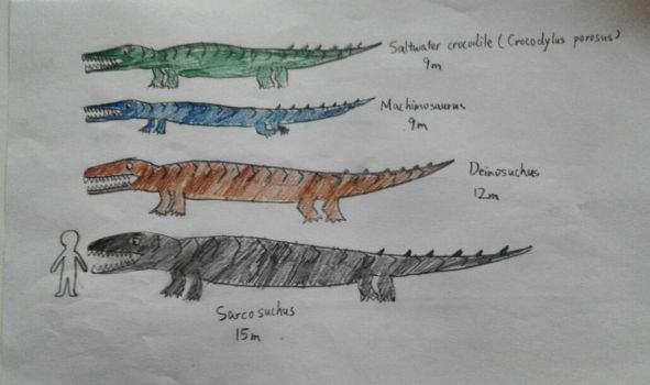 Saltwater Crocodile Size Comparison | www.imgkid.com - The ...