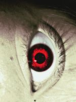 Vampyre eye by underneath-the-paint