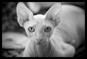 My Hairless Pussy by greenian