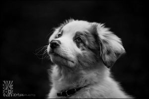 Jazz Puppy Portrait by XetsaPhoto