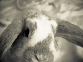 Shiver the Bunny by barefootphotos