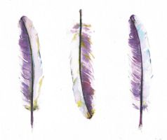Feathers by Amberjdugdale