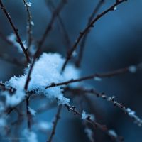 Touch Of Winter XXIV by JoannaRzeznikowska
