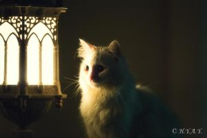 Cat by the Lamp by jeans05