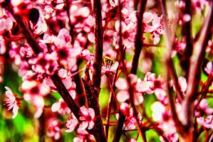 Spring Bee by TPextonPhotography