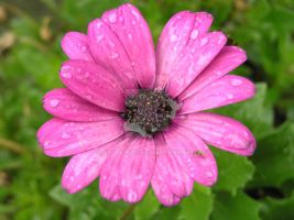 flower with raindrops by 69raywwf