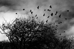 Flight of The Damned by Solus-Photography