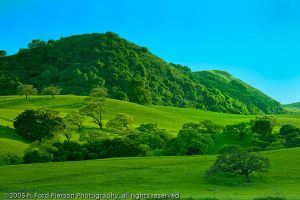 Gilroy Greens 912 by hfpierson
