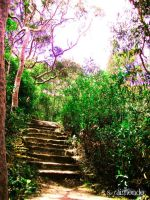 Beyond The Stone Steps by WarriorQueen2005
