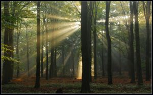 Lightthought 500 by lightthinker