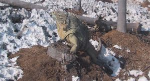 iguanas by catfromhell