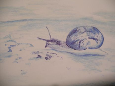 Snail Drawing by oomaloo