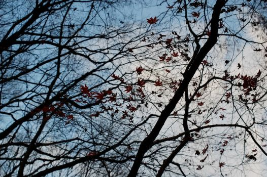 Evening Branches by Sakanoue