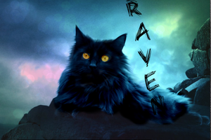 Raven Picture Edit by foxthepegasister