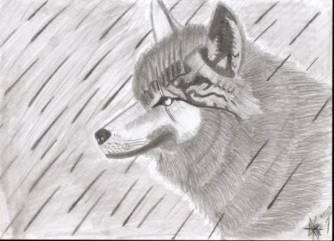 Wolf by Jumper02