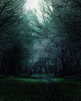 Forest  background FGM by FairieGoodMother