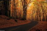 Autumn Road by FlorentCourty