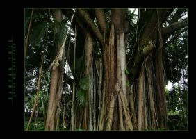 Banyan Tree by SilentMYSTIQUE