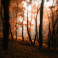 -Where mist glazing trees- by Janek-Sedlar