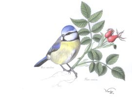 Blue tit and wild rose by Meerclar