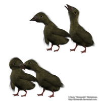 Duckling png stock set 1 by Direwrath