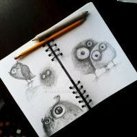 owls sketch by bemain