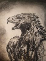 Eagle by Cinius