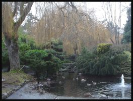 Beacon Hill Pond by Grogee