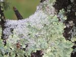 Snow on Moss on a Tree by Charlief43