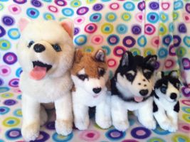 All The Disney Husky Plushies! by BeautifulHusky