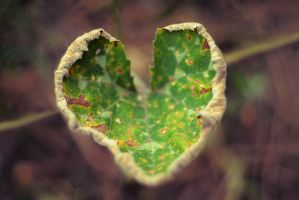 nature heart by Antrisolja