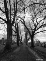 Cemetery Path by Estruda