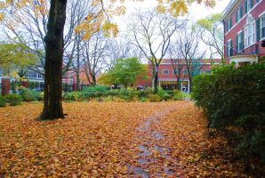 Golden Leaves of Harvard by demosthenesandender