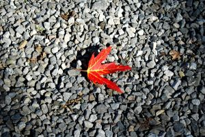The Little Red Leaf by TheVortex