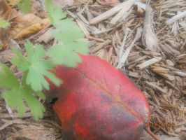 Plant and Red fall leaf by elijahloveshorror