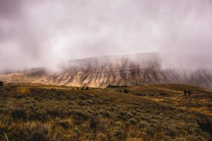 Yellowstone fog by toblet
