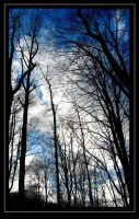 Through the branches by Kheila