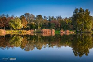 Autumn reflections by NorbertKocsis