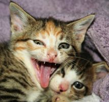 Oh it's a hard life for us kittens! by LESHA