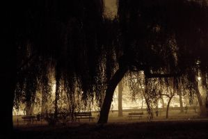 Park in the fog by mila2boo
