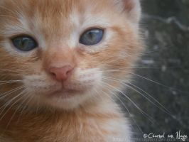(Boy) George the kitten by CharnelvonNaye