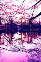 View in Pink by absinthalicious