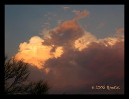 Crazy Mad Duck Cloud by RooCat