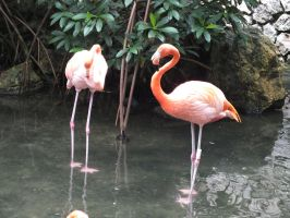 Flamingos by eyannaandkianalovesu