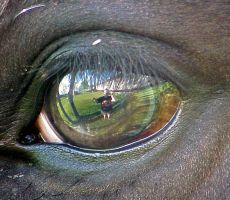 horse's eye by Mezrella